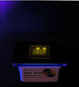 Dark-Reader-Transilluminator